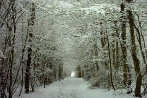 snow-300x200