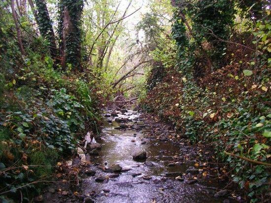 creeks-e1333424229100